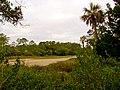Pinckney Island National Wildlife Refuge (5957930923).jpg
