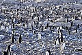 Pingüinos, Cuverville 2.jpg