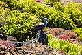 Piquero patirrojo (Sula sula), Punta Pitt, isla de San Cristóbal, islas Galápagos, Ecuador, 2015-07-24, DD 64.JPG