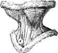 Planche XII Corset Leoty (1867)cut.png
