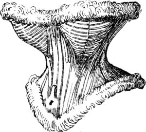 Hourglass corset - Hourglass corset from 1867