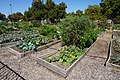 Plano October 2015 44 (First Baptist Church Community Garden).jpg