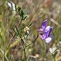 Plants OB 653 (38880978091).jpg