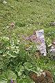 Plants am Rufikopf 32.JPG