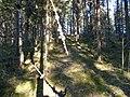 Polku - panoramio.jpg