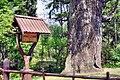 Pomnik przyrody , Dąb Chrobry w Piotrowicach (rodzic).Z żołędzi tego drzewa wyhodowano dęby papieskie. - panoramio.jpg