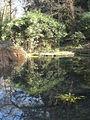 Pond on Pentillie Castle estate - geograph.org.uk - 1205412.jpg