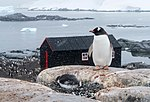 Port Lockroy, Antarctica (24914087926).jpg