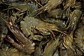 Prawns for sale from Vilupuram District IMG 4055.jpg