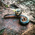 Predatory bug and millipede (23290138142).jpg