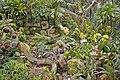 Princess of Wales Conservatory, Kew Gardens, Surrey - geograph.org.uk - 1184904.jpg