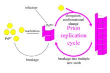 Propagation study definition research