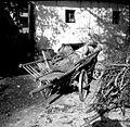 Procke s krompirjem na vozu, Gradež 1948.jpg