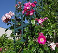 Promenade plantée - roses j.JPG
