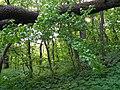 Psilskyi Landscape Reserve (05.05.19) 10.jpg