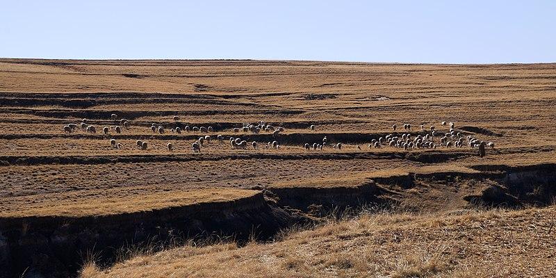 File:Qoqolosaneng, Leribe, Lesotho - panoramio.jpg