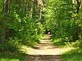 Rahnsdorf - Waldweg (Woodland Path) - geo.hlipp.de - 36817.jpg