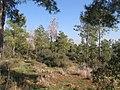 Ramat-ha-Nadiv-manor-trail-760.jpg