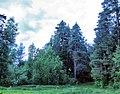 Ramensky District, Moscow Oblast, Russia - panoramio - Andris Malygin (13).jpg