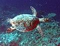 Reef4449 - Flickr - NOAA Photo Library.jpg