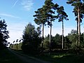 Rendlesham Forest SSSI (Fire route 4) - geograph.org.uk - 261193.jpg