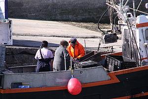 Retour de la pêche à la seiche du fileyeur Jason IV (32).JPG