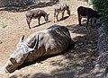 Rhino in Tbilisi.jpg
