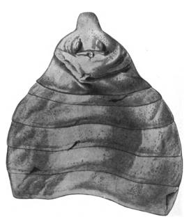 <i>Rhinocarcinosoma</i> Extinct genus of eurypterids