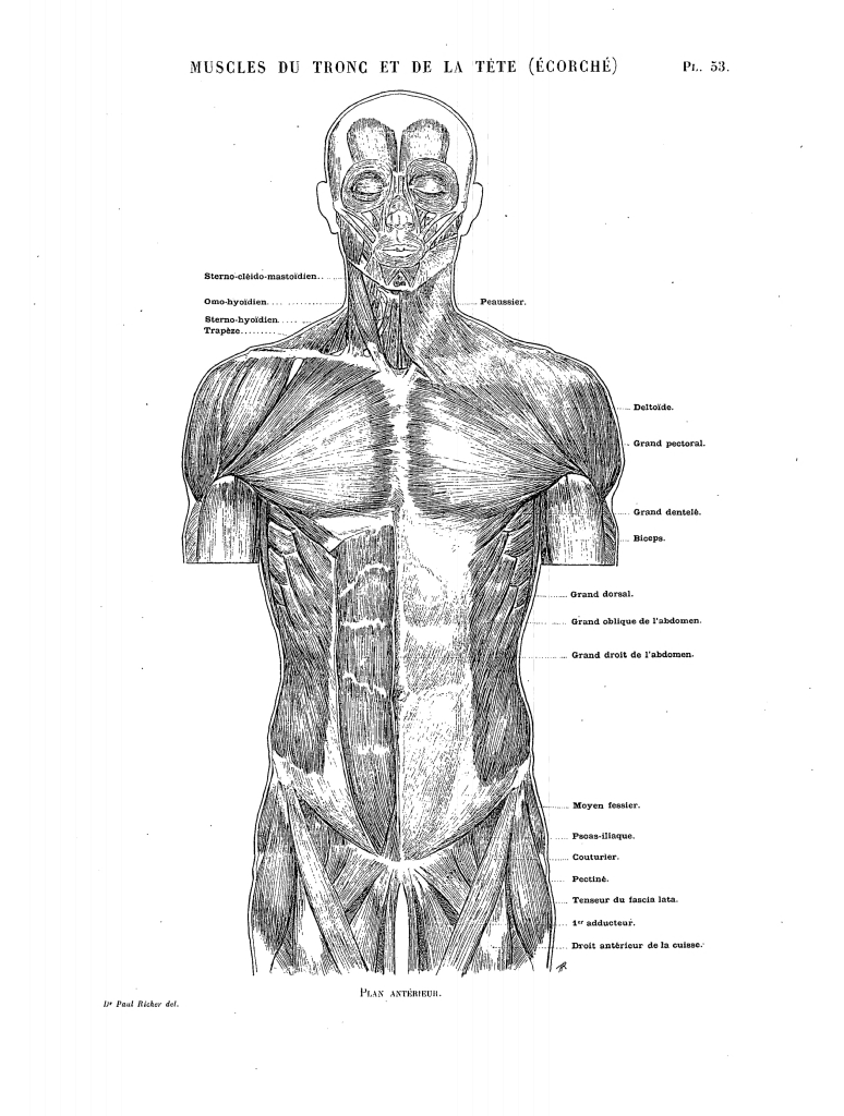 File:Richer - Anatomie artistique, 2 p. 60.png - Wikimedia Commons