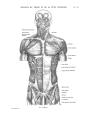 Richer - Anatomie artistique, 2 p. 60.png