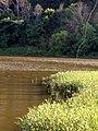 River fishing - panoramio (1).jpg