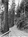Road through forest on Ohop Hill near Eatonville, July 12, 1896 (WAITE 152).jpeg