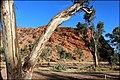 Rock formation at the Gap, Alice Springs IMG 2540 07.jpg