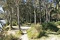 Royal National Park NSW 2233, Australia - panoramio (23).jpg