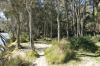 Mediterranean forests, woodlands, and scrub - A dry sclerophyll woodland in Sydney