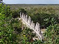 Ruin Viewed from Great Pyramid - Uxmal Archaeological Site - Merida - Mexico.jpg