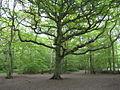 Ruislip Park Wood - geograph.org.uk 1871570.jpg