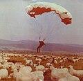 Ryszard Łodzikowski skydiver, Nowy Targ 1984.jpg