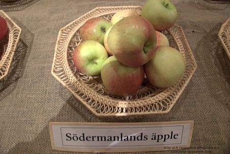 Södermanlands äpple.jpg