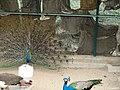 Safari Park Karachi (Zoo) - panoramio (2).jpg