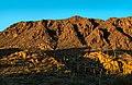 "Saguaro ""forest"" (32148414992).jpg"