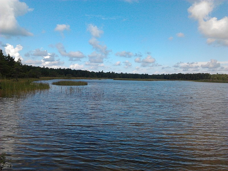 File:Saka järv 2012.jpg