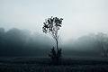Samotne drzewo w Parku Krajobrazowym Podlaski Przełom Bugu.JPG