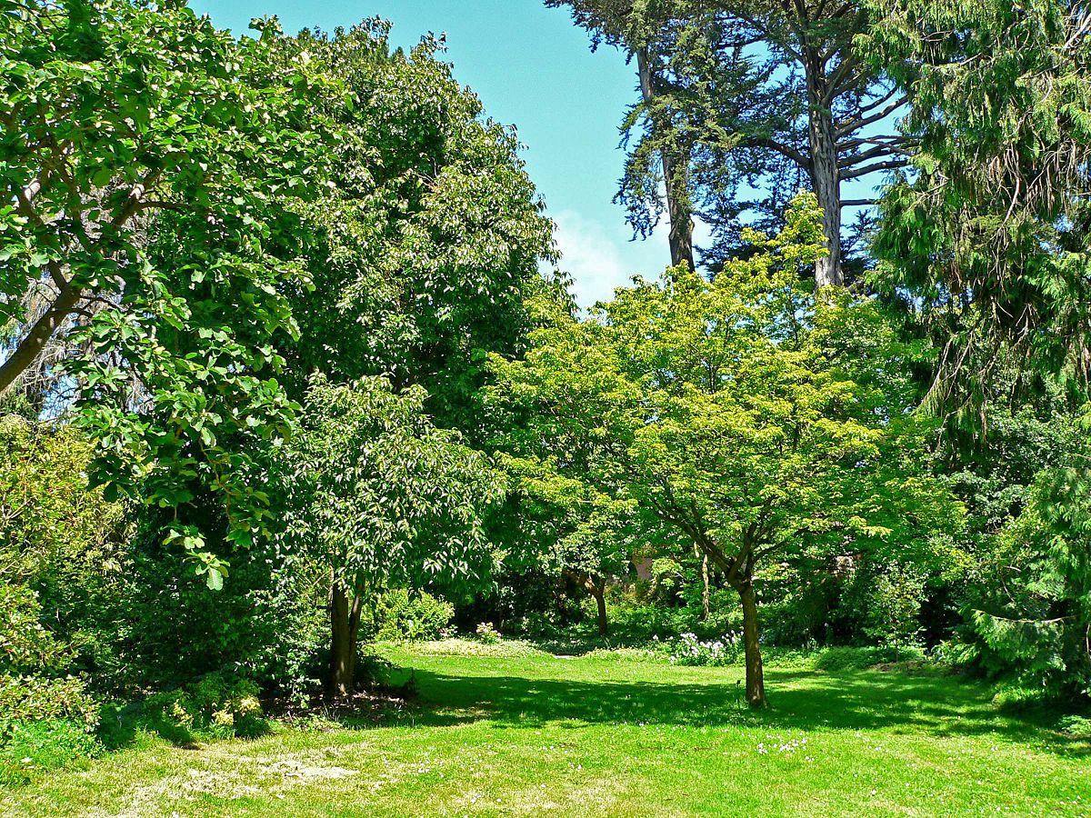 Lichtung wiktionary for San francisco botanical gardens