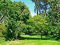 San Francisco Botanical Garden glade.jpg