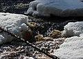 Sanginjoki Oulu 20120422.JPG
