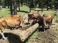 Sapaca köyü - betkılıç - panoramio.jpg
