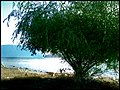 Sauce En El Puerto, Lago Colico - panoramio.jpg