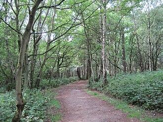 Scratchwood - Path in Scratchwood