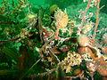 Seaweed at Windmill Beach PA111755.JPG
